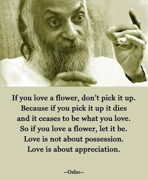Love Quotes Osho: Love Quote By Osho